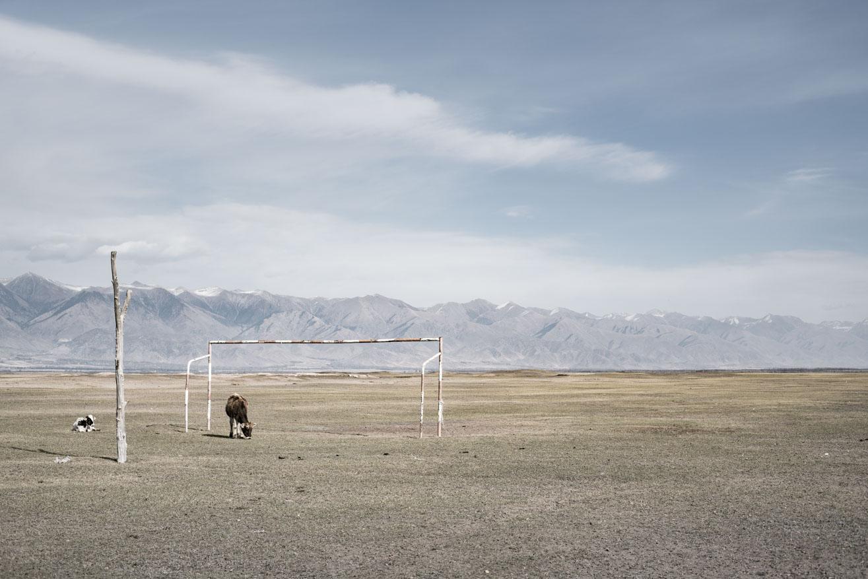 vache football ouzbekistan kirghizstan ex-URSS Asie centrale olivier octobre photographe documentaire reportage